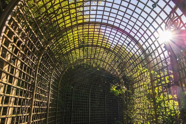 Długi tunel z zielonymi roślinami przy pałac versailles