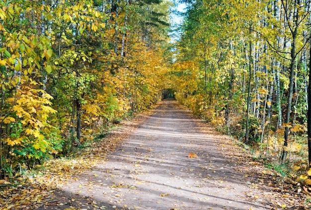 Długie cienie na leśnej drodze wychodzącej w oddali.