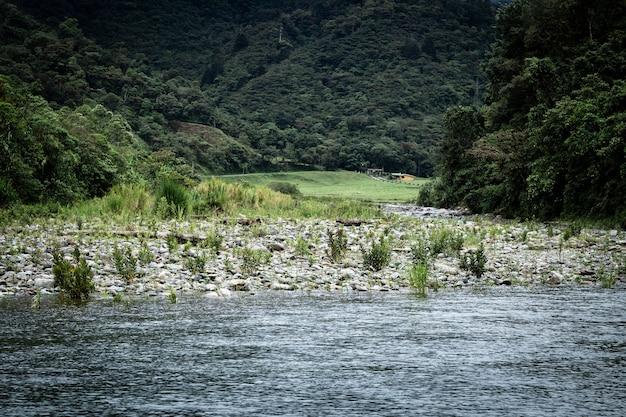 Długie ujęcie krajobrazu lasu i wody