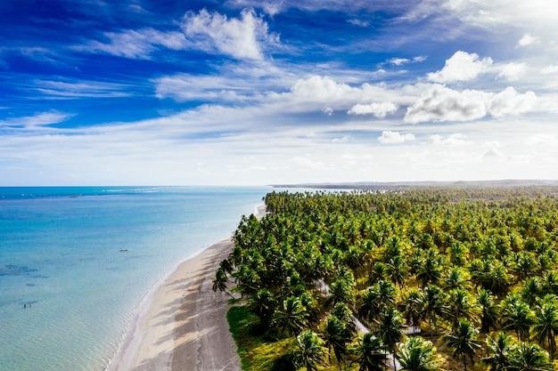 Długie ujęcie pięknej linii brzegowej z białym piaskiem wysadzanym palmami kokosowymi w słoneczny dzień