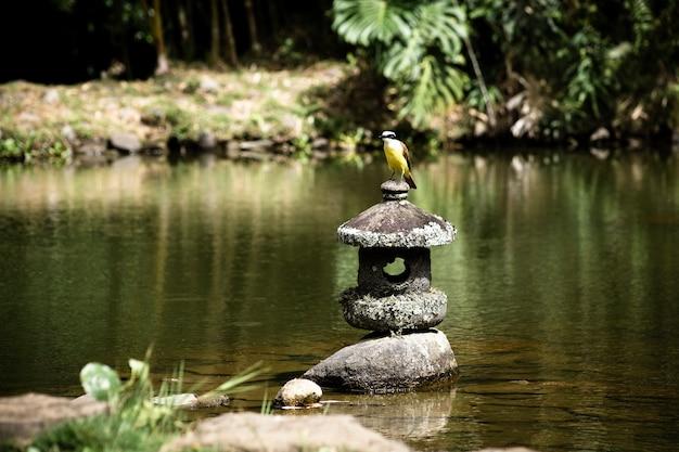 Długie ujęcie ptaka na jeziorze z niewyraźne tło