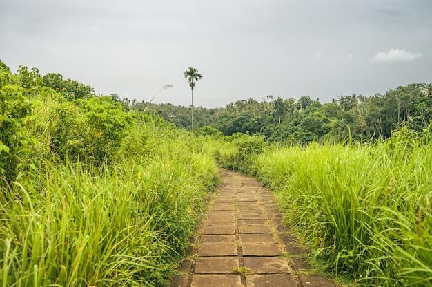 Długie ujęcie ścieżki wysadzanej trawami z pięknym widokiem na las górski w pochmurny dzień