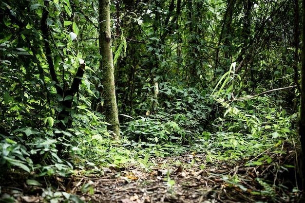 Długie ujęcie tropikalnej dżungli z drzewami i roślinnością