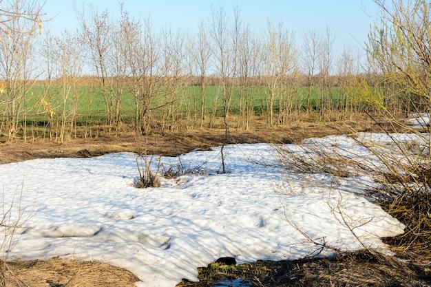 Długo oczekiwana wiosna. unikalne zjawisko naturalne, śnieg i zielona trawa. zielone pole, las, drzewa i krzewy. piękny wiosenny krajobraz.