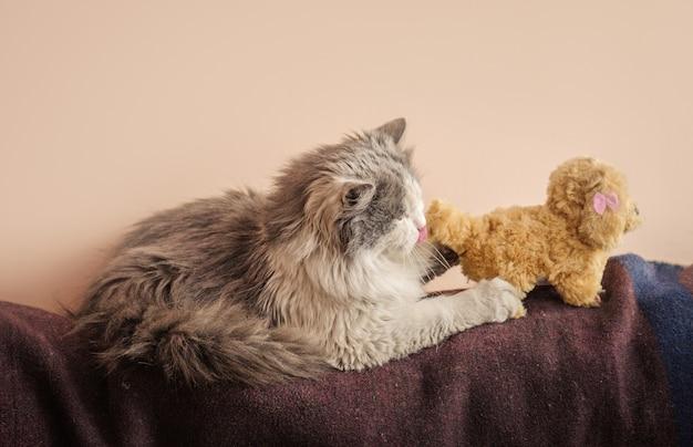Długowłosy kot z zabawką, kotek bawi się zabawkami
