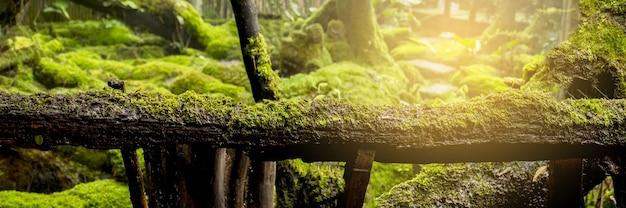 Dno lasu w ogrodzie pokrywają rośliny w stylu mchów i paproci.