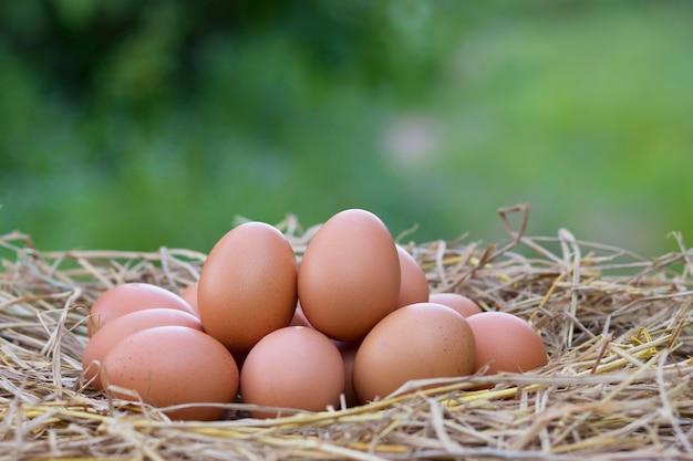 Dobrej jakości jaja kurze na gnieździe ze słomy na rozmytym zielonym tle, z białkiem i wartością odżywczą na lokalnej farmie w tajlandii.