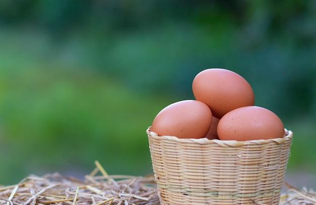 Dobrej jakości jaja kurze w koszu ze słomką na lokalnej farmie w tajlandii. zbliżenie i rozmycie tła kurczaka. (rhode island red)