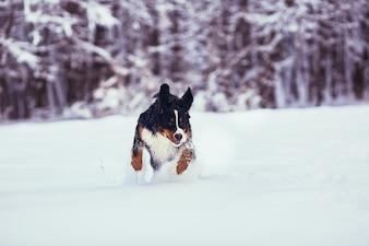 Dobry pies biegnący wzdłuż parku