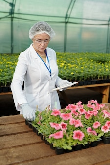 Dojrzała kobieta w ochronnej odzieży roboczej opiekująca się różowymi sadzonkami petunii