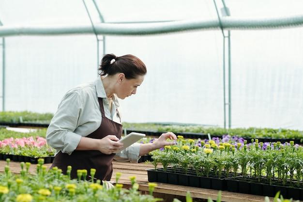 Dojrzała kobieta z tabletem patrząca na jedną z sadzonek kwiatów