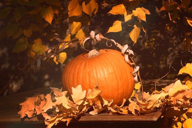 Dojrzała pomarańczowa dynia halloween na zewnątrz