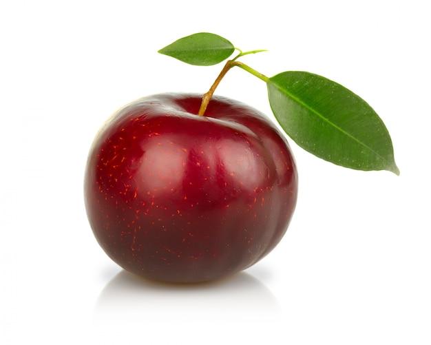 Dojrzała śliwki owoc odizolowywająca