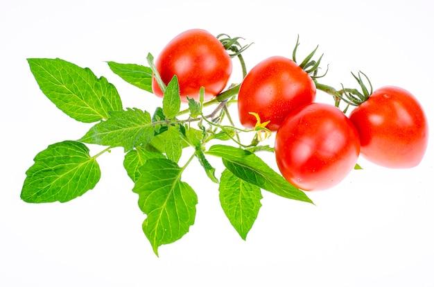 Dojrzałe czerwone pomidory z gałęzi i liści na białym tle zbliżeniu. zdjęcie studyjne.