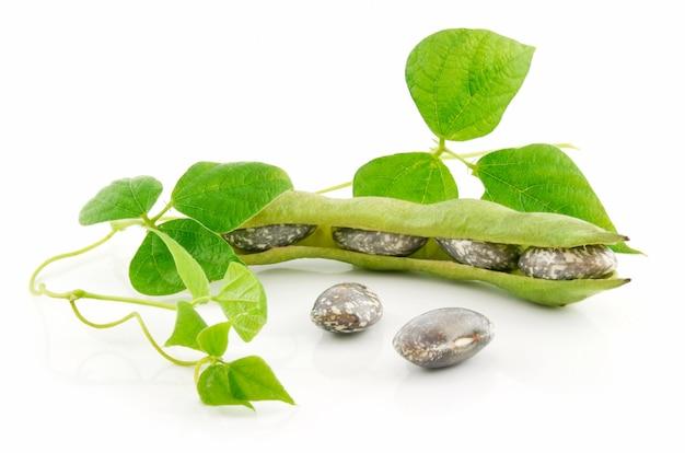 Dojrzałe fasole haricot z nasion i liści na białym tle