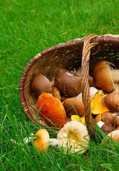 Dojrzałe grzyby w wierzbowym koszu na zielonej trawie z bliska