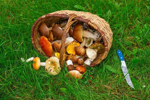 Dojrzałe grzyby w wierzbowym koszu na zielonej trawie z nożem