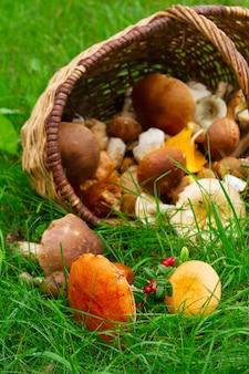 Dojrzałe grzyby z koszem na zielonej trawie