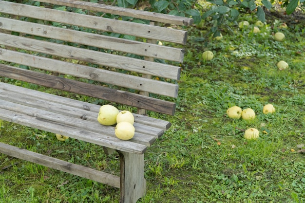 Dojrzałe jabłka na ziemi i ławce ogrodowej