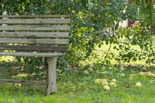 Dojrzałe jabłka na ziemi w ogrodzie z ławką