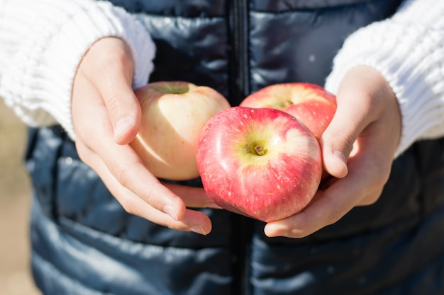 Dojrzałe jabłka w rękach dzieci w słoneczny jesienny dzień na zewnątrz. zbiory sezonowe. dieta wegetariańska i detoks