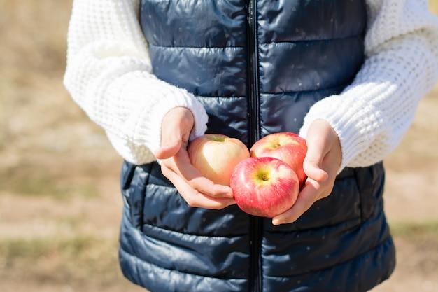 Dojrzałe jabłka w rękach dzieci w słoneczny jesienny dzień na zewnątrz. zbiory sezonowe