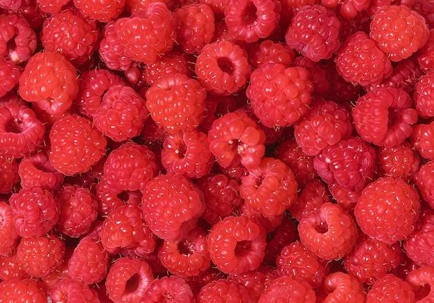 Dojrzałe maliny, kolorowy wzór świeżych czerwonych malin na tle. szkarłatne szkarłatne pole, płaskie ułożenie. składniki soku malinowego.