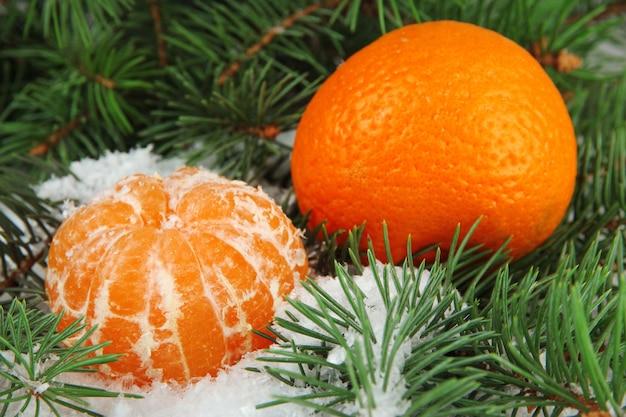 Dojrzałe mandarynki z gałęzią jodły w śniegu z bliska