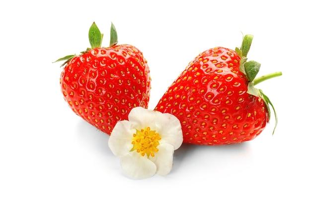 Dojrzałe truskawki i kwiat na białym