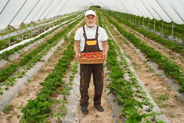 Dojrzały ogrodnik trzymający kosz pełen świeżych truskawek