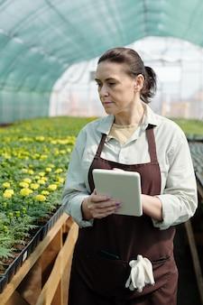 Dojrzały rolnik w odzieży roboczej korzystający z tabletu podczas poruszania się po stołach z zielonymi sadzonkami