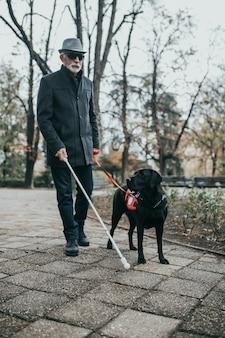 Dojrzały ślepiec z długą białą laską spacerujący w parku z psem przewodnikiem.