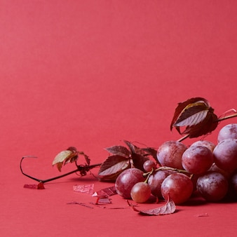 Dojrzały winogrono czerwone. różowy bukiet z liści na białym tle