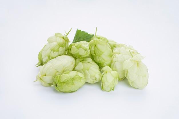 Dojrzały zielony chmiel