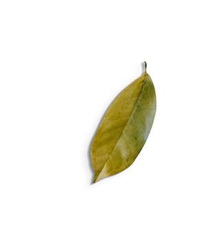 Doładuj widok na białym tle zielonych liści na białym background.fit dla elementu projektu.