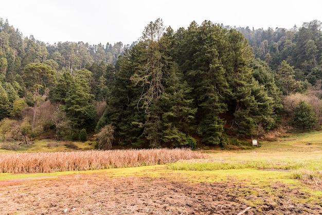 Dolina i drzewa w lesie
