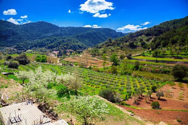 Dolina z gajem oliwnym i winnicą