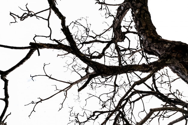 Dolny widok nieżywy drzewo i dezorganizowane gałąź odizolowywać na białym tle. koncepcja śmierci, beznadziejności, rozpaczy, smutku i lamentu. tło dzień halloween.