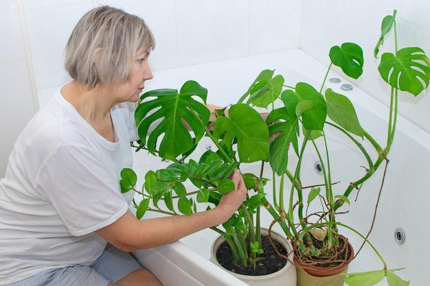 Dom ogrodniczy. kobieta podlewa i myje zielone rośliny w domowej kąpieli.