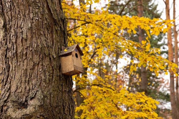 Dom szpaka na drzewie w jesiennym parku