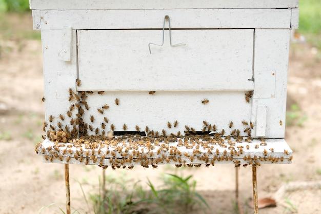 Dom ula pszczoły miodnej z bliska