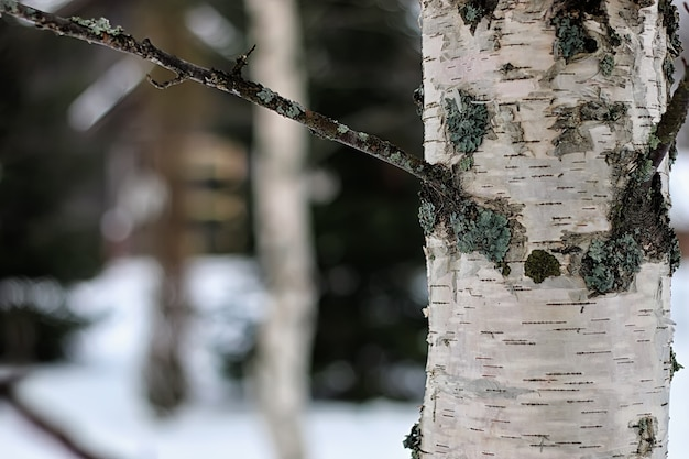 Dom w lesie zima