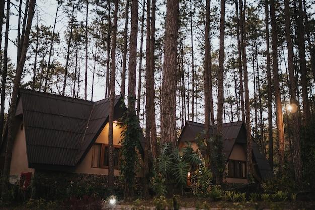 Dom wakacyjny w lesie sosnowym