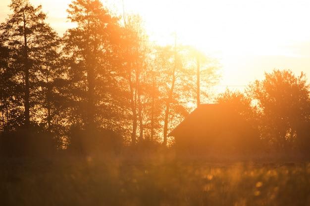 Dom z wysokimi drzewami i pięknym słońcem