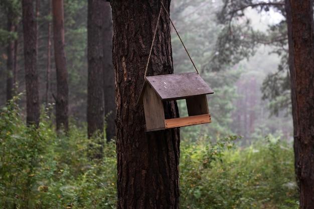 Domek dla ptaków w lesie