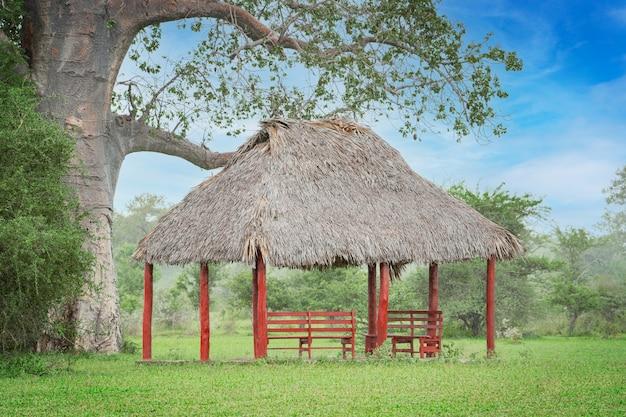 Domek ogrodowy lub wiata z drewnianymi czerwonymi stojakami i ławką pod strzechą w pobliżu baobabu
