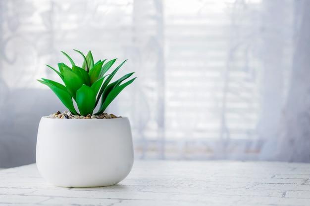 Domowa roślina w białej doniczce na białym oknie