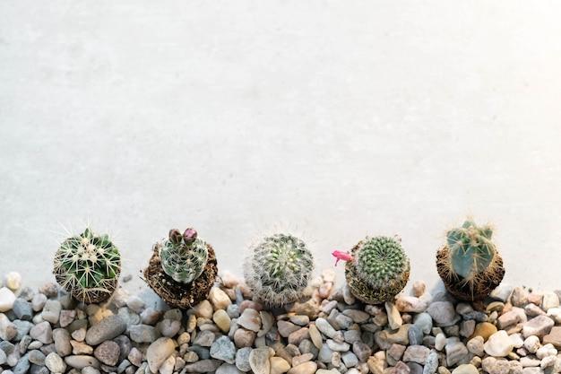 Domowe kaktusy na stole