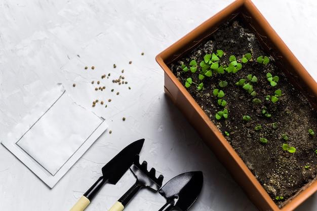 Domowe ogrodnictwo świeże ziołowe kiełki bazylii w doniczce, narzędzia ogrodowe i pakowanie nasion