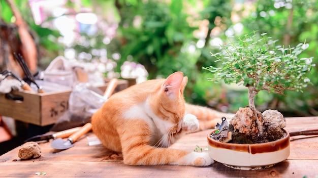 Domowe ogrodnictwo z kotem po zamknięciu i kwarantannie. aktywność rekreacyjna w ogrodzie botanicznym podczas kryzysu koronowego. zostań w domu, aby odpocząć i zdystansować się.